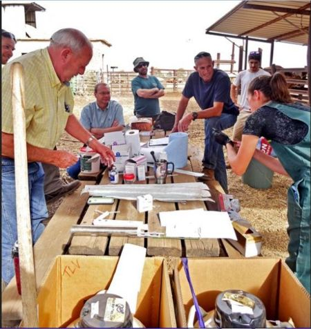 In the northern Gilboa Forest section of Israel, Dr. Em Mowrer (right) of Barnesville,Ohio prepares to implant Texas Longhorn embryos from Dickinson Cattle Co. ...