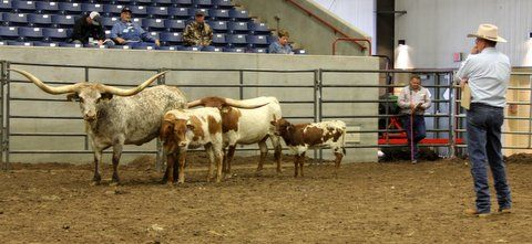 Judge John Oliver of Texas selected as All Age Grand Champion Non Halter cow the DCC entry Iron On by Drag iron.