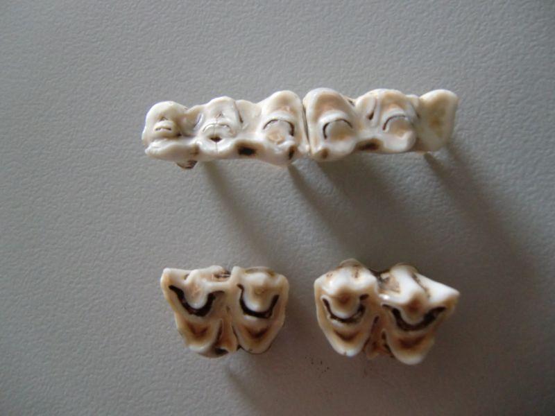 Zahnwechsel - Q und Oxn Schule Zengermoos